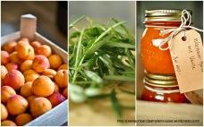 Wachauer Apricot