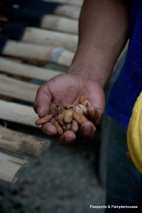 Hands at Work in Ecuador